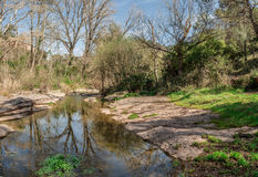 The calm of a river between the vegetation stock photo