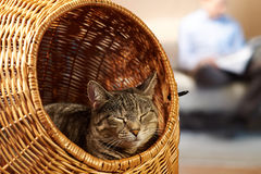 Saturday at home with cat Stock Photo