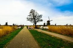 Romantic gorgeous beautiful view of old Dutch windmills in the middle of clear open fields royalty free stock images