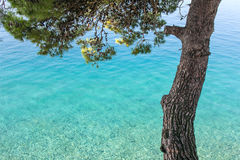 Calm Sea and Pine Stock Images