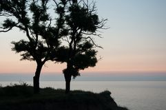 Calm sea surface behind two tree's silhouette. Stock Photo