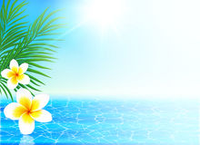 Calm sea and tropical flowers summer background Royalty Free Stock Images