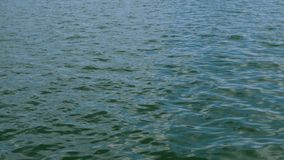 Calm sea wave with ripples running in Black sea. Sun reflection. Natural marine background. stock footage