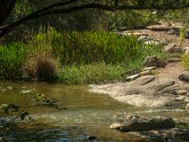 Calm section of river with rocks in water and on banks, in forest woods royalty free stock photo