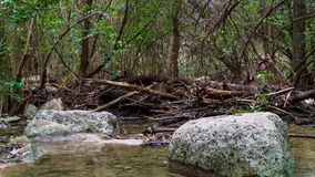 Calm section of river with rocks in water and on banks, in forest woods stock photography