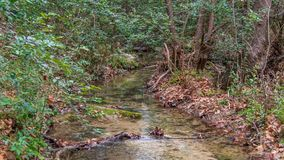 Calm section of small river stream with fall colored leaves piled up on banks stock photo