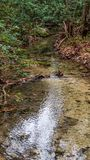 Calm section of small river stream with fall colored leaves piled up on banks royalty free stock image