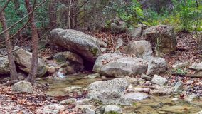 Calm section of stream with rocks in the water and on banks, in forest woods stock photography
