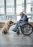 Serene disabled mature man enjoying time with hound Stock Photography