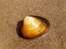Calm Shell Royalty Free Stock Image