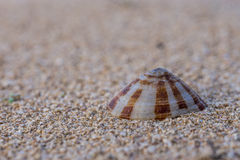 A calm shell on a beach sand stock photography