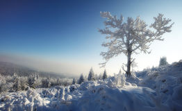 Calm and snow winter. On Krusne mountains, Czech Republic Stock Photo