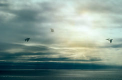 Calm After Storm. Birds Flying over Ocean with Storm Clouds. Wild Nature Landscape. Calm After Storm. Birds flying over ocean. Wild nature landscape with storm stock images