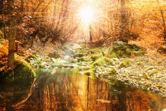 Calm stream Royalty Free Stock Images