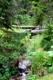 Calm stream in the middle of a forest stock image