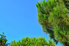 Calm summer background with a cloudless blue sky and green trees royalty free stock images