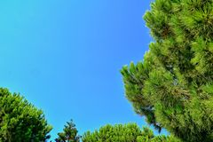 Calm summer background with a cloudless blue sky and green trees royalty free stock photo