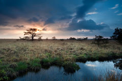 Calm sunset over swamps with little pine trees Stock Image