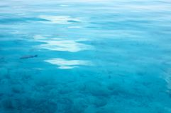 Calm surface of the water. Nice calm surface of the ocean water royalty free stock photos