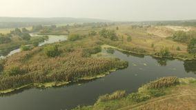 Calm swampy river in forest, summer daytime meadow. Aerial shot with fog at horizon. stock video