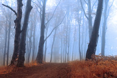 Calm trail with blue fog intot he forest Stock Image