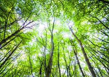 Spring forest theme with trees and sky royalty free stock images