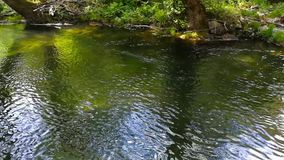 Calm and transparent water in the forest.  stock video