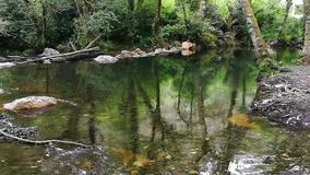 Calm and transparent water in the forest.  stock footage