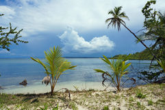 Calm tropical shore with coconut trees and cloud Stock Image