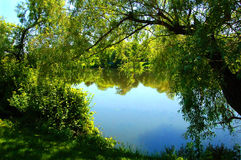 Calm Water. A calm body of water framed through green trees and shrubs Stock Photo