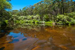 Calm water with lush vegetation reflections. Kangaroo River, NSW, Australia stock photo