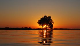 Calm Water Surface Overlooking Sun Setting on the Horizon Blocked by the Silhouette of Tree Royalty Free Stock Photography