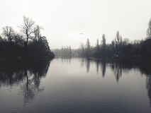 Calm Water in Between of Tall Trees Classic Photo Royalty Free Stock Photography