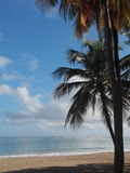 Calm waters on palm tree lined coast in Puerto Rico Stock Photography