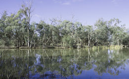Wetlands, Kings Billabong Near Psyche Pumps, Austr. The reflection of the  blue leaved gums along the calm tranquil waters of Kings Billabong near Psyche Pumps Stock Photography