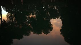 Calm waters of park pond. Chill water of park pond with mirrored trees in twilight time stock video
