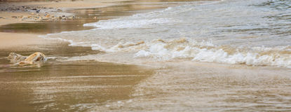 Calm waves on a sandy beach. Calm waves crashing a sandy beach Stock Photography
