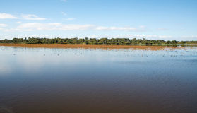 Calm Wetland Waters Royalty Free Stock Photo