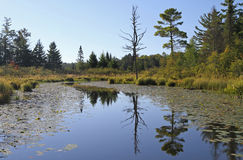 Calm Wilderness Waterway with Reflections Stock Image