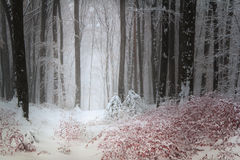 Calm winter day in the forest Royalty Free Stock Photo