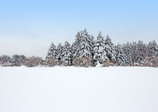 Calm winter forest after the snowstorm Stock Images