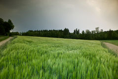 Calma antes de la tormenta Fotografía de archivo libre de regalías