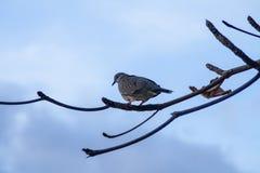 Calma colgante del pájaro en una rama de árbol en Bali imagen de archivo