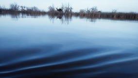A calma da água imagens de stock