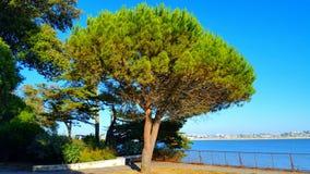 Calma de la hierba del árbol del mar Foto de archivo