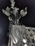 Calma de la noche Imagen de archivo libre de regalías