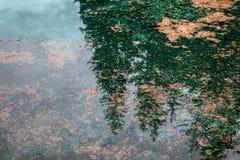 Calma del fondo natural Fotografía de archivo libre de regalías
