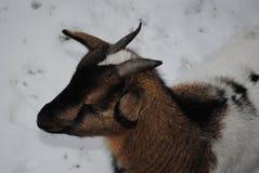Calma dos animais de estimação imagens de stock