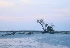 Calma y soledad - paisaje con el solo árbol, Rocky Earth, y el cielo claro - minimalismo - escasez del agua imágenes de archivo libres de regalías