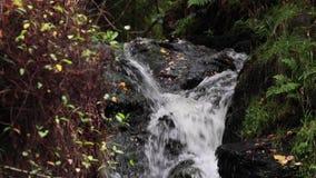 Calmando, calme la cascada durante septiembre en Escocia Las aguas de la vida metrajes